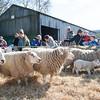 082_Lambing Sunday