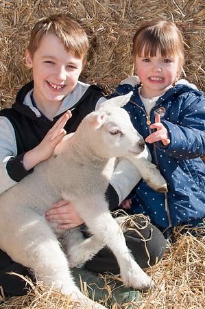 075_Lambing Sunday