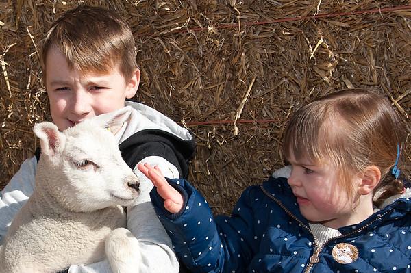 068_Lambing Sunday
