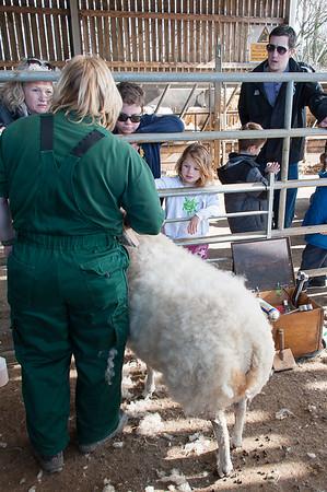 103_Lambing Sunday