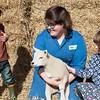 005_Lambing Sunday