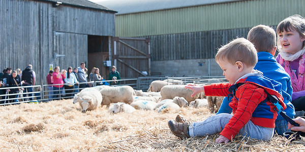 093_Lambing Sunday