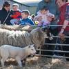 084_Lambing Sunday