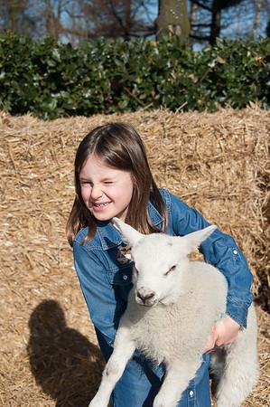 020_Lambing Sunday