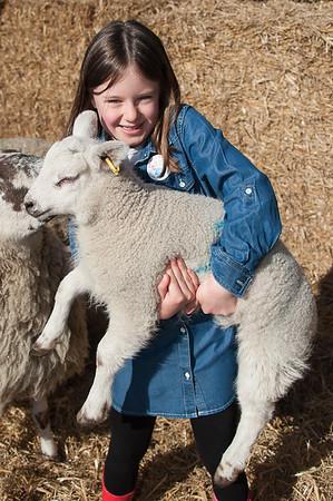 015_Lambing Sunday
