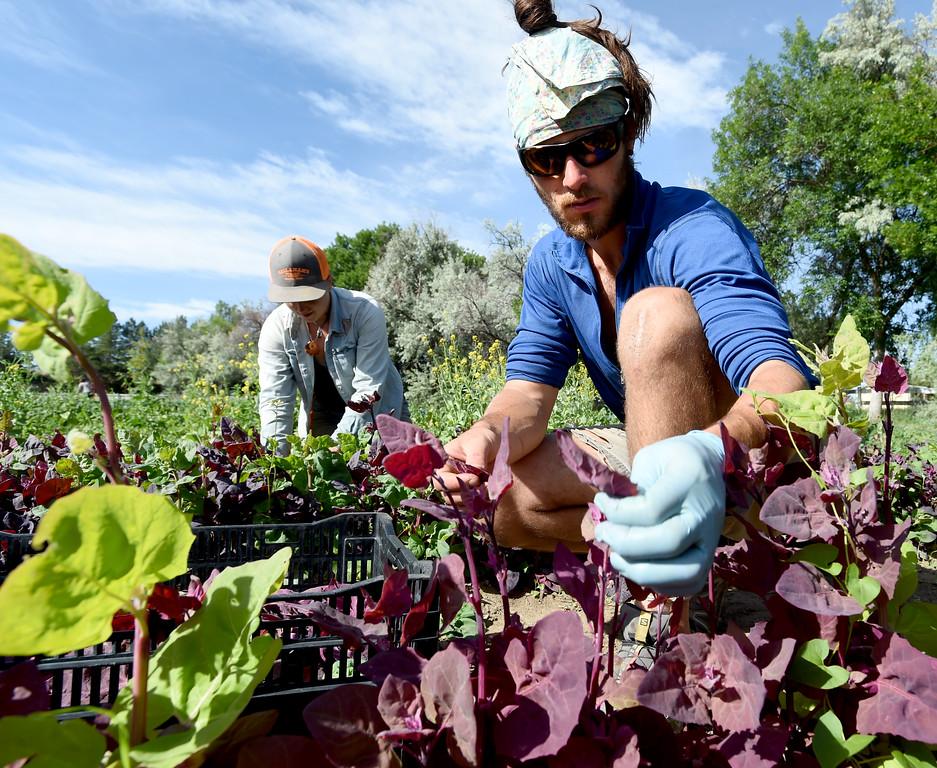 Aspen Moon Farm - biodynamic agriculture
