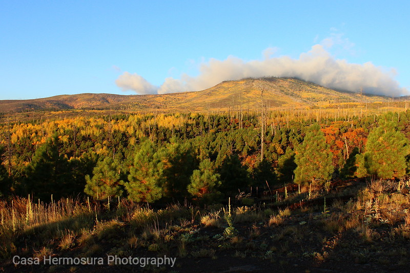 Pajarito Mountain in Fall Color