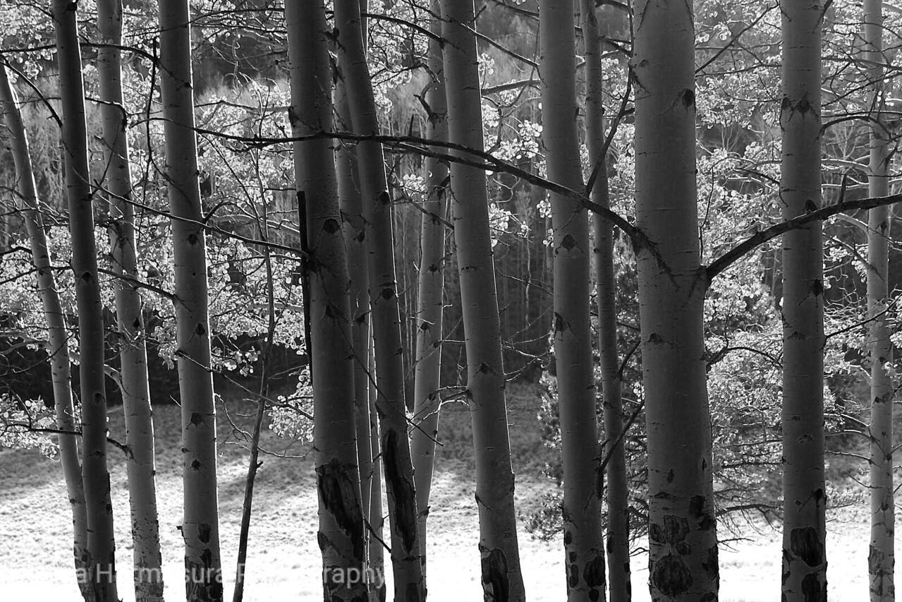 Fall Colors … in Black and White