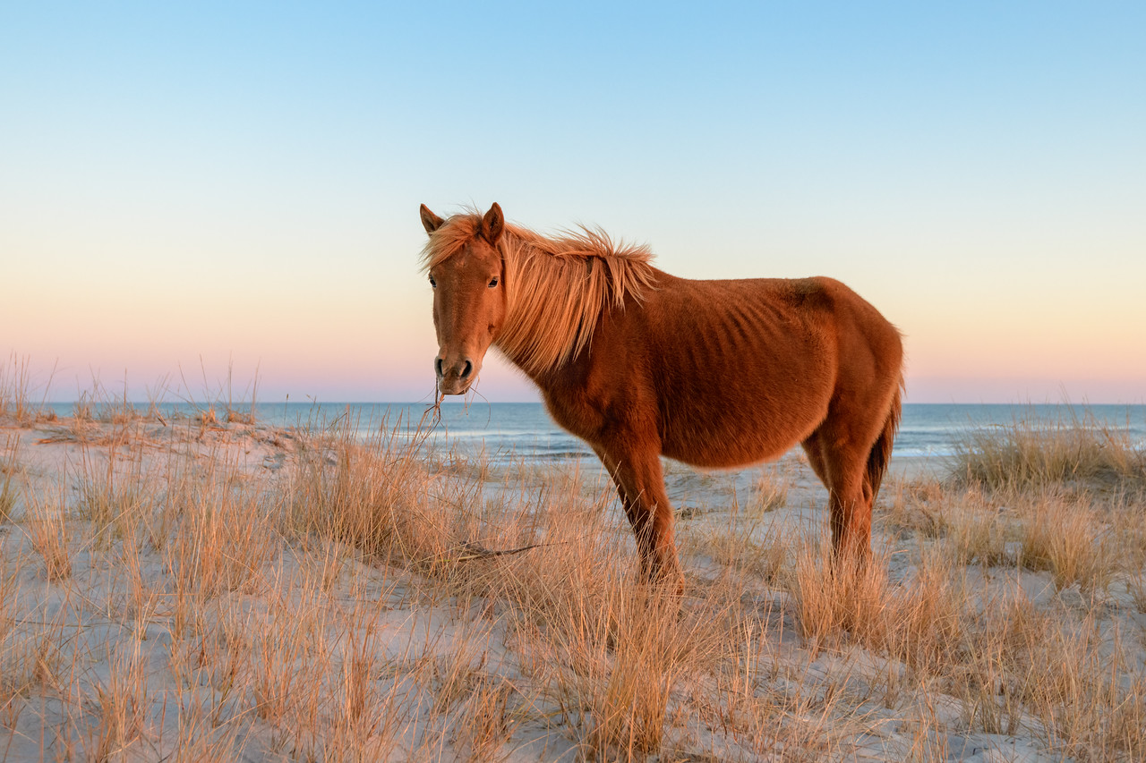 Harmony in the dunes - Assateague Island
