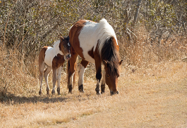 Autumn Glory and foal, 2021