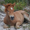 Brown Colt Horse Photo