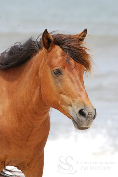Brown Horse Picture