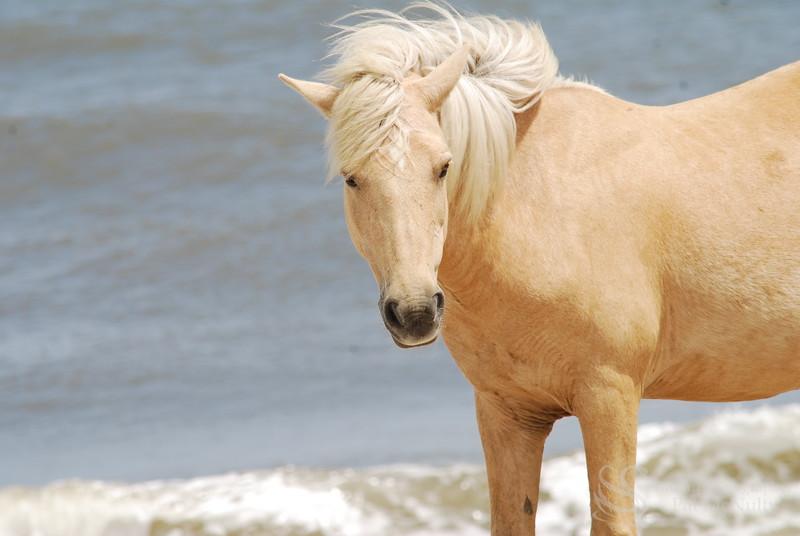 Blonde Horse Photo