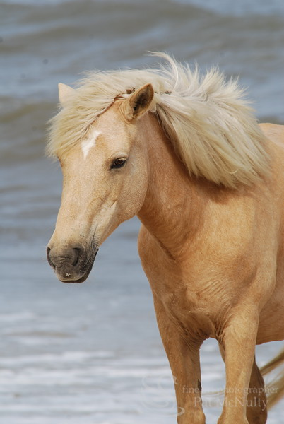 Blonde Horse Picture