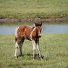 Horse Brown Foal Photo