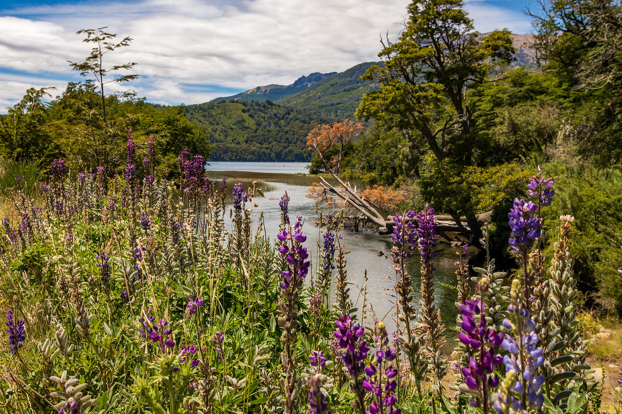Patagonia's Lake District is among the top things to do on a Patagonia adventure
