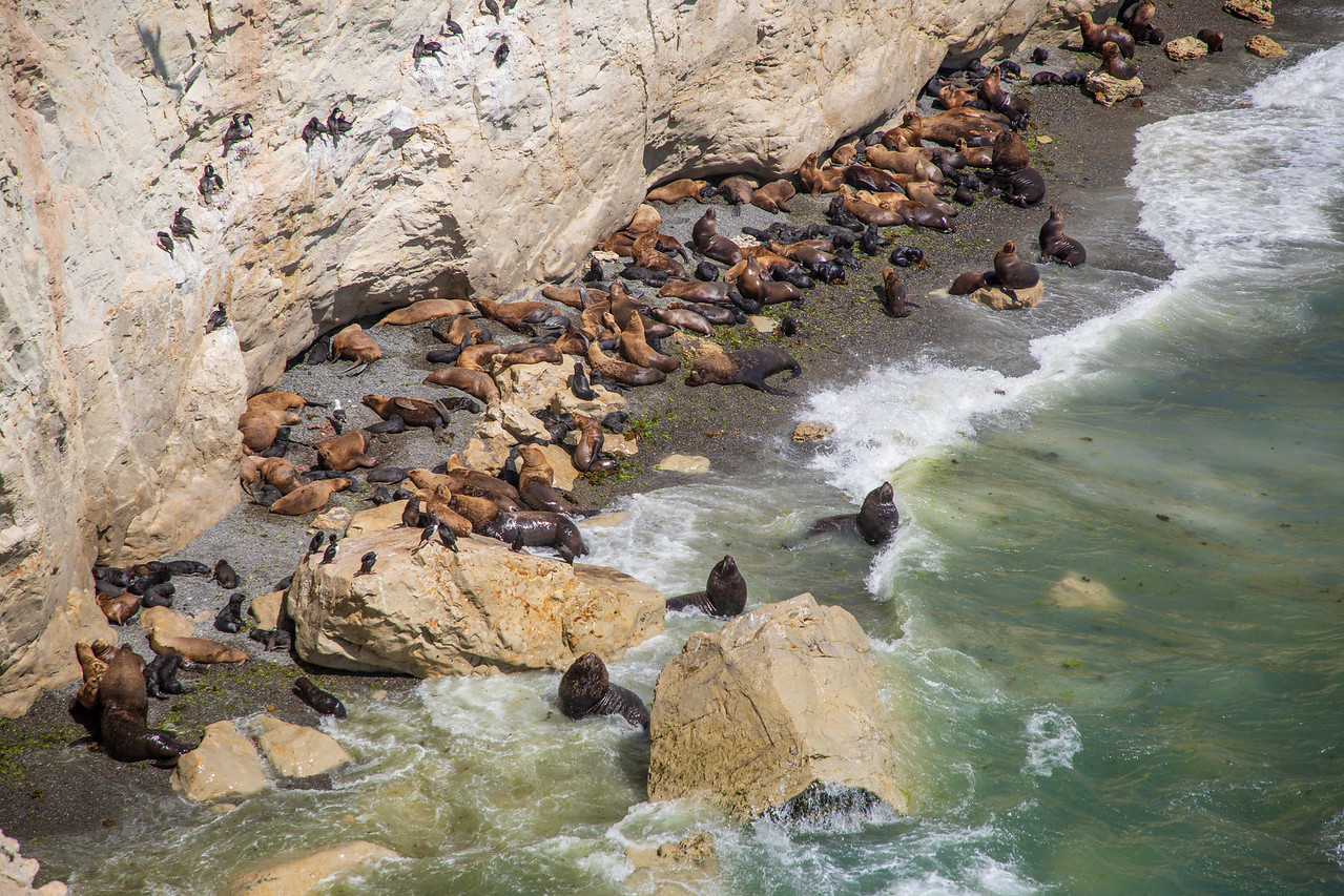 Sea Lions at the Punta Loma Natural Reserve should be on all Patagonia Itinerary