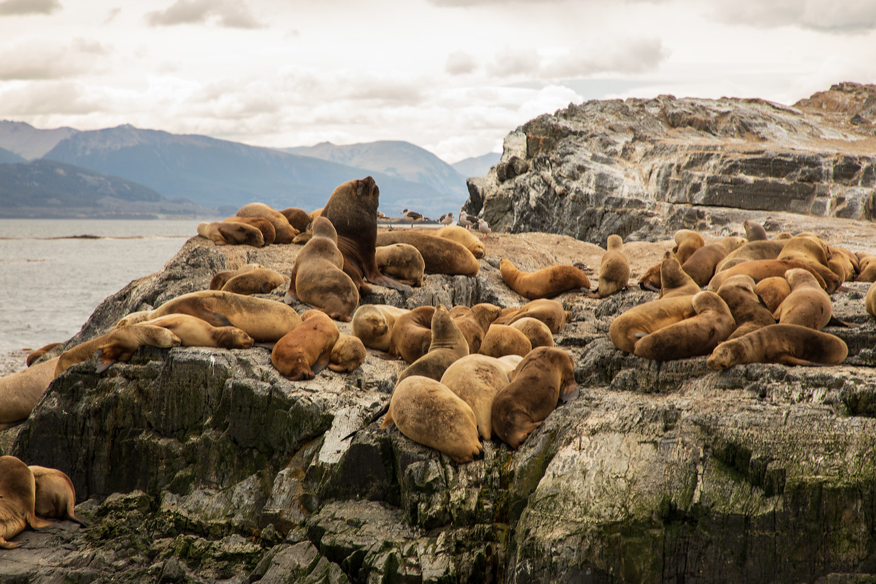 Sea Lions Were On the Itinerary in Ushuaia, Patagonia