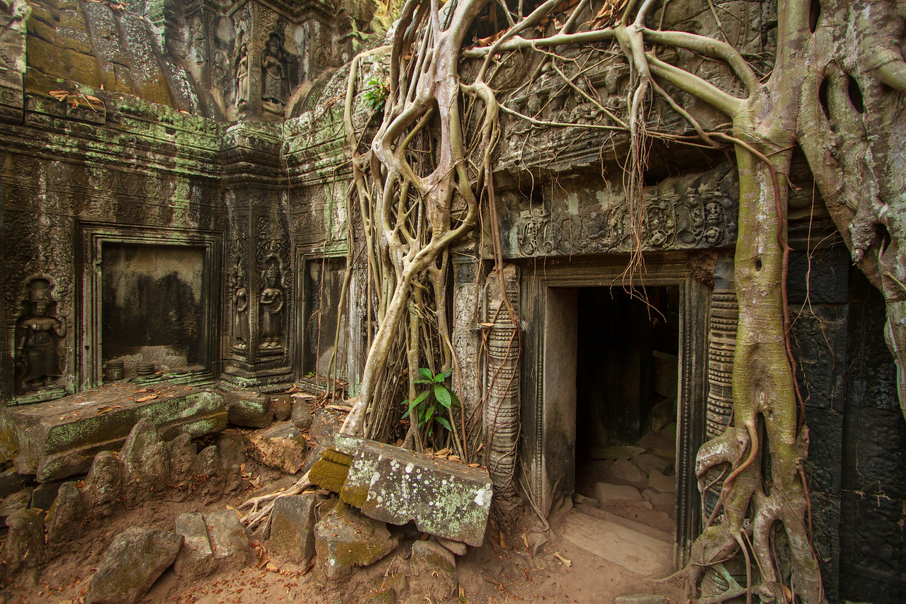 Wordless Wednesday | Ta Prohm Temple, Angkor, Cambodia