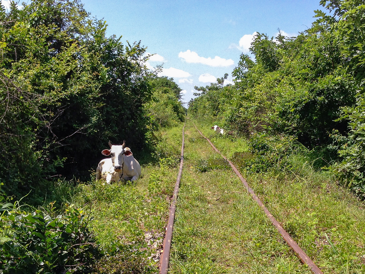 Hazards on the Bamboo Railroad in Battambang