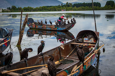 Fishing Comorants in Dali, China