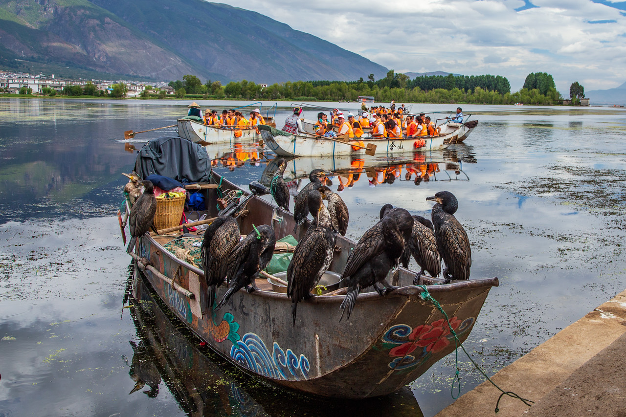 Crowds of Tourists to See the Fishing Cormorants, on Lake Erhai, Lijiang, Dali, in China