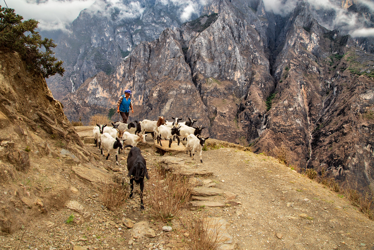 This Goat Herder Was the Only Other Person We Saw on This Section of Tiger Leaping Gorge