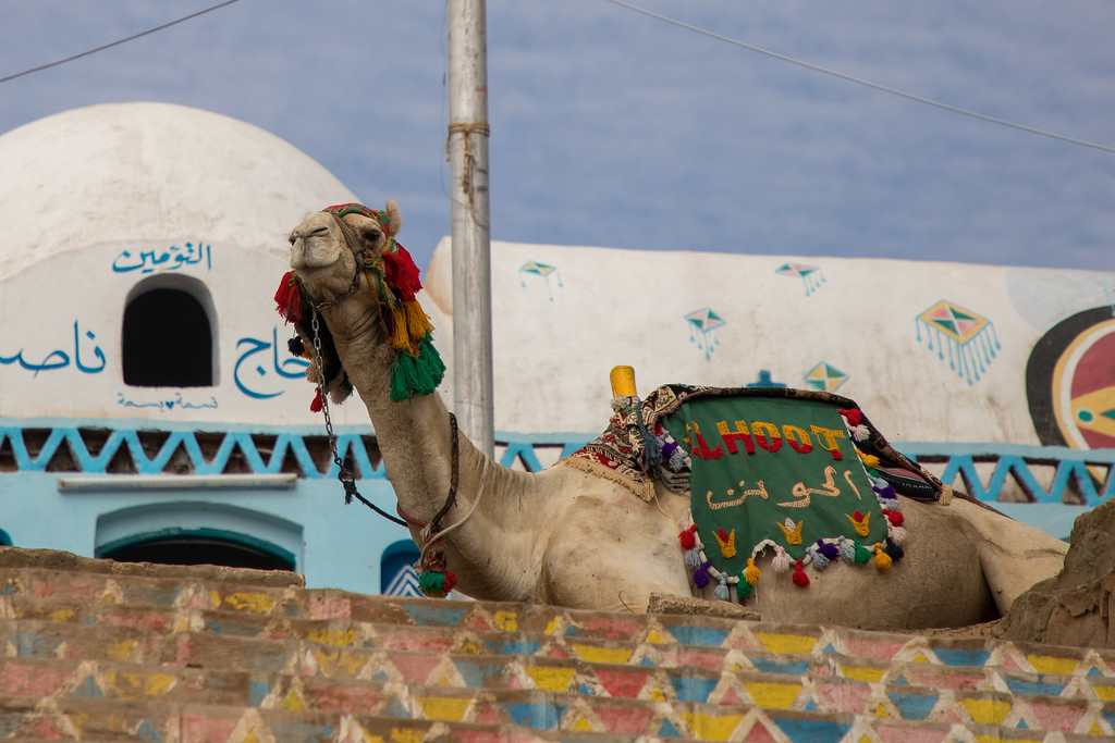 A Camel Greeted Us Upon Arrival to the Nubian Village