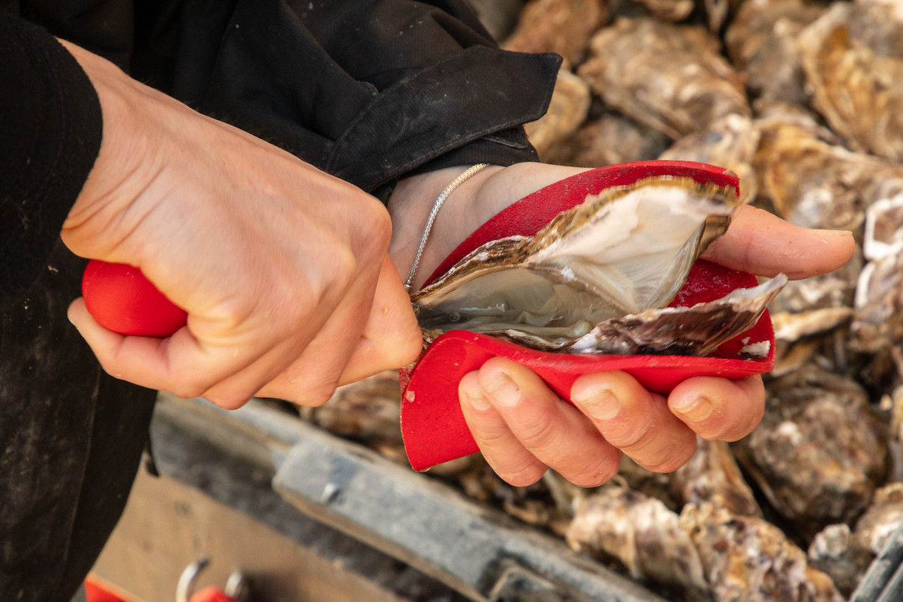Opening Fresh Cancale Oysters
