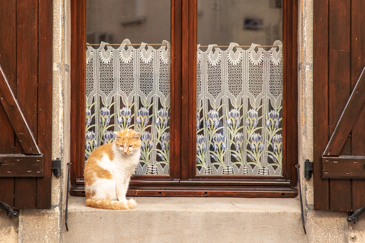 It Doesn't Look Like this Cat in Marseillette, France has Woken Up This Morning