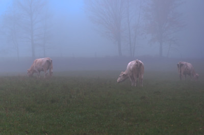 Early Morning Grazers