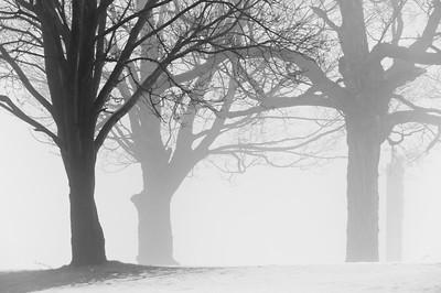 Fog Study 1
