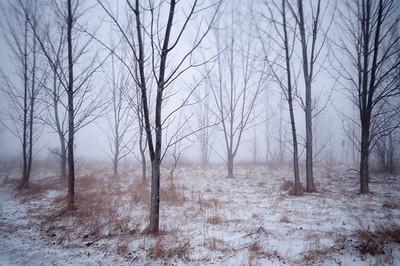 Winter Squall On Ridge