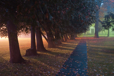 Cedar Walkway In Gloam