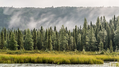 Shroud in Morning Pines