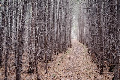 Late Fall in Cedars