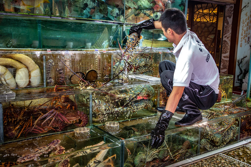 Seafood Aquariums in Sai Kung