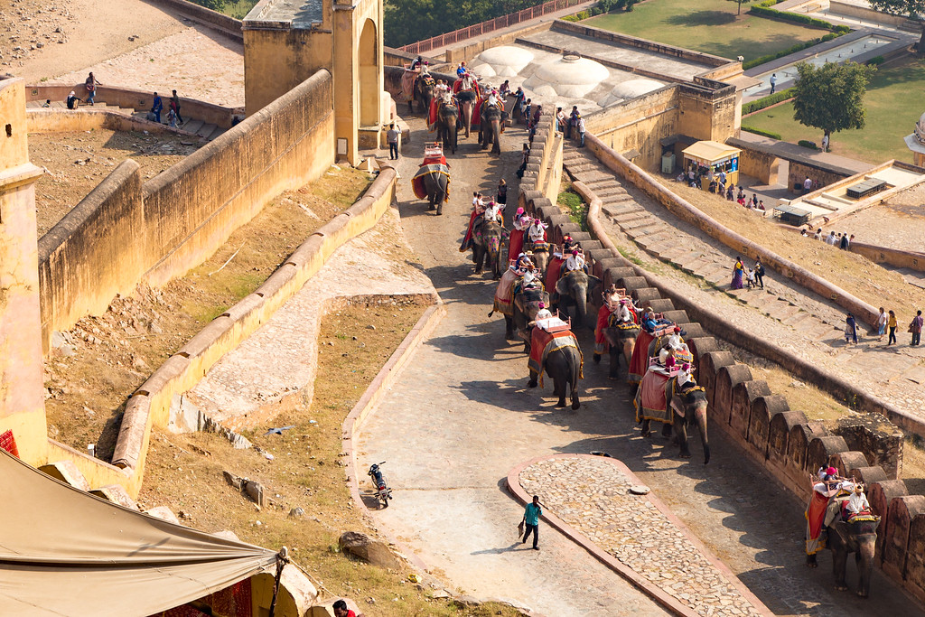 Picture of Elephants Take Tourists to the Top of the Amber Fort in Jaipur India
