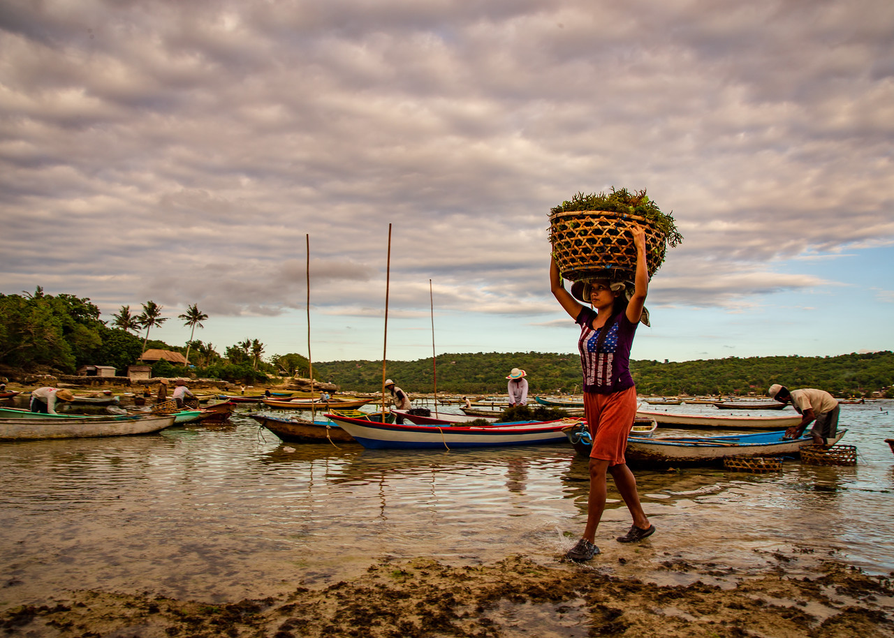Seaweed Farmer in Indonesia Carrying a Basket of Seaweed