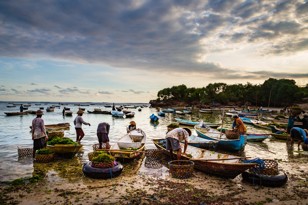 Seaweed Farming on Lembongan Island, Indonesia