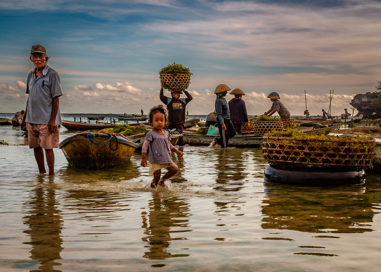 Farming Seaweed Photo Essay, Bali Indonesia