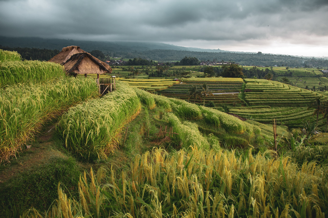 Jatiluwih Rice Terraces of Bali, Indonesia During Storms