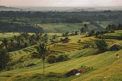 Jatiluwih Rice Terraces of Bali, Indonesia