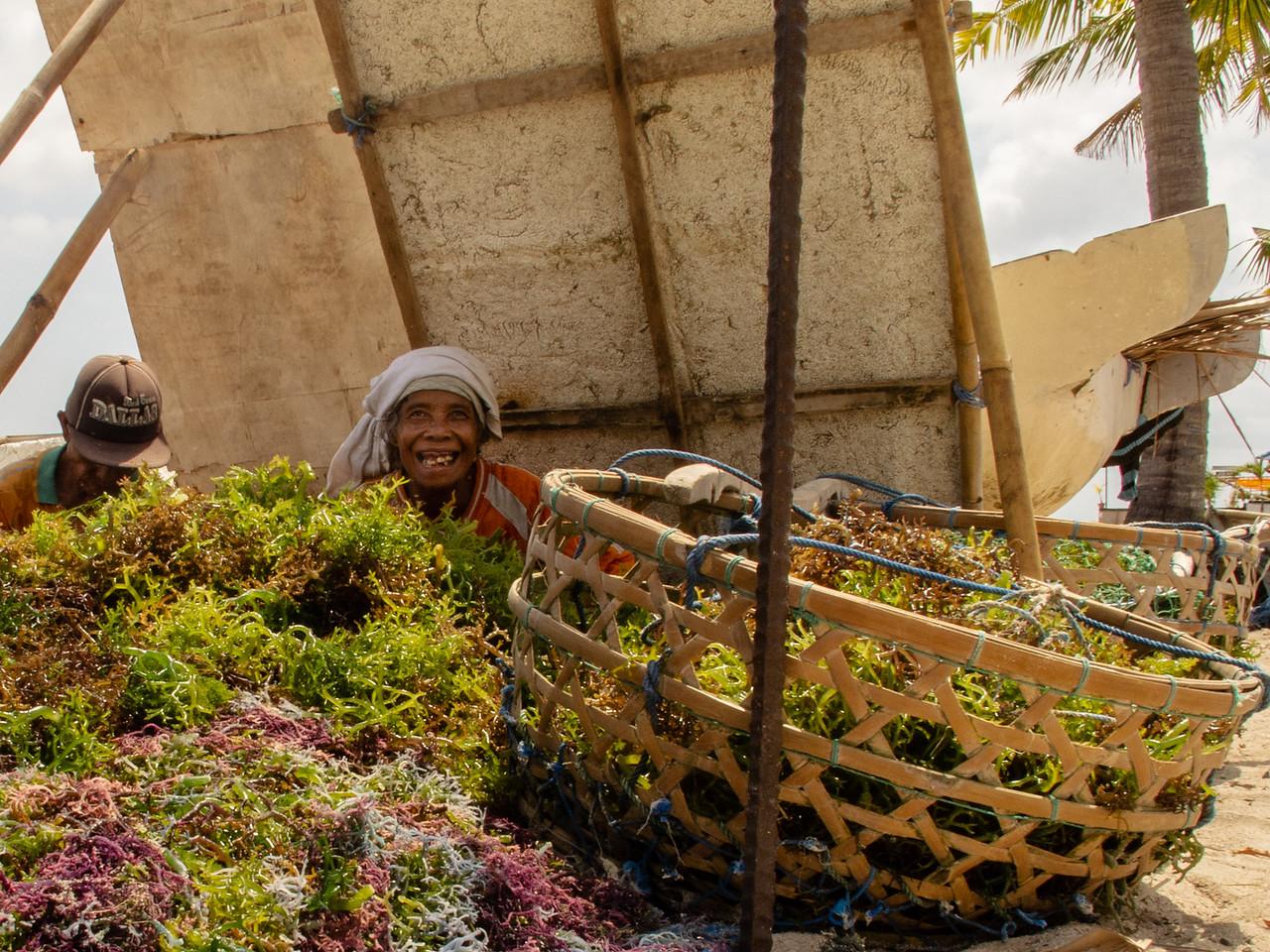 Nusa Lembongan Seaweed Farmer Proudly Showing Her Crop