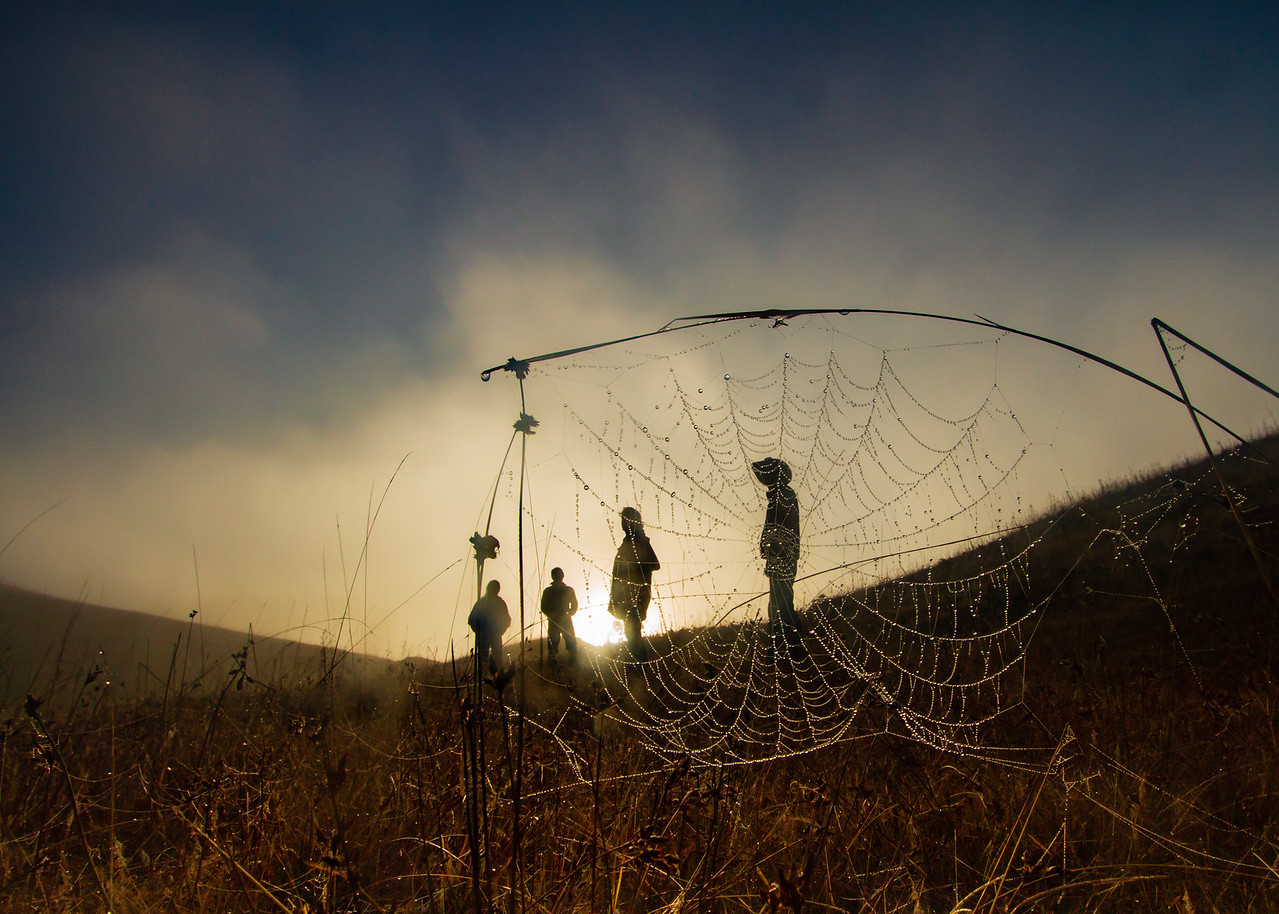 Spider Web at Sunrise in Chiapas, Mexico
