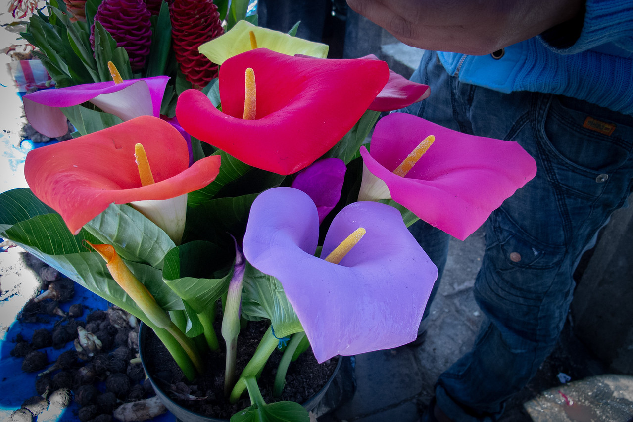 Colored Calla Lillies in the Markets of San Cristobal de Las Casas Mexico
