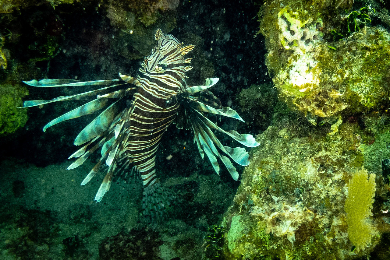 The Quarry in Lionfish Hunting