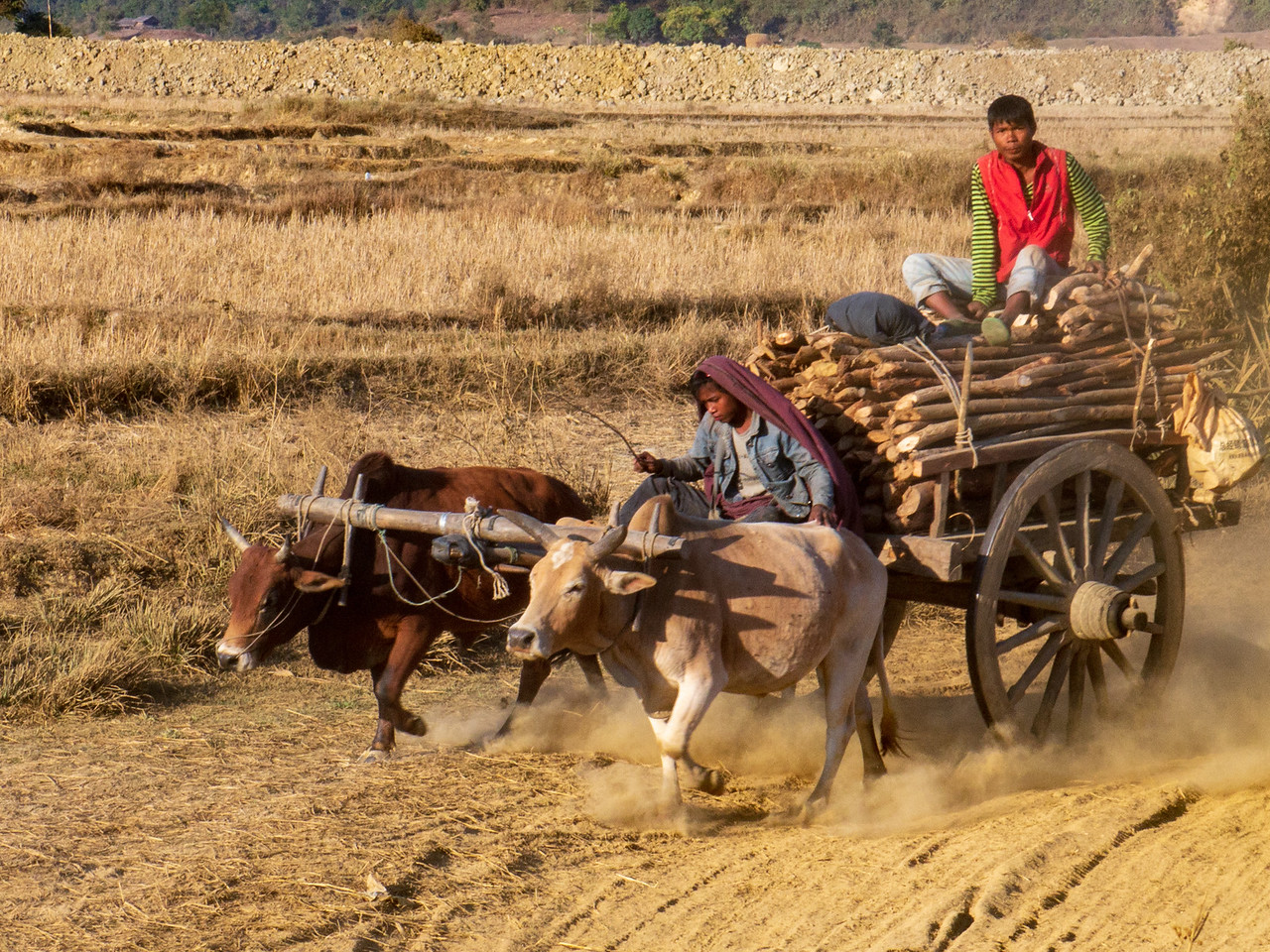 Ox Cart Drivers in Mruak OO, Myanmar