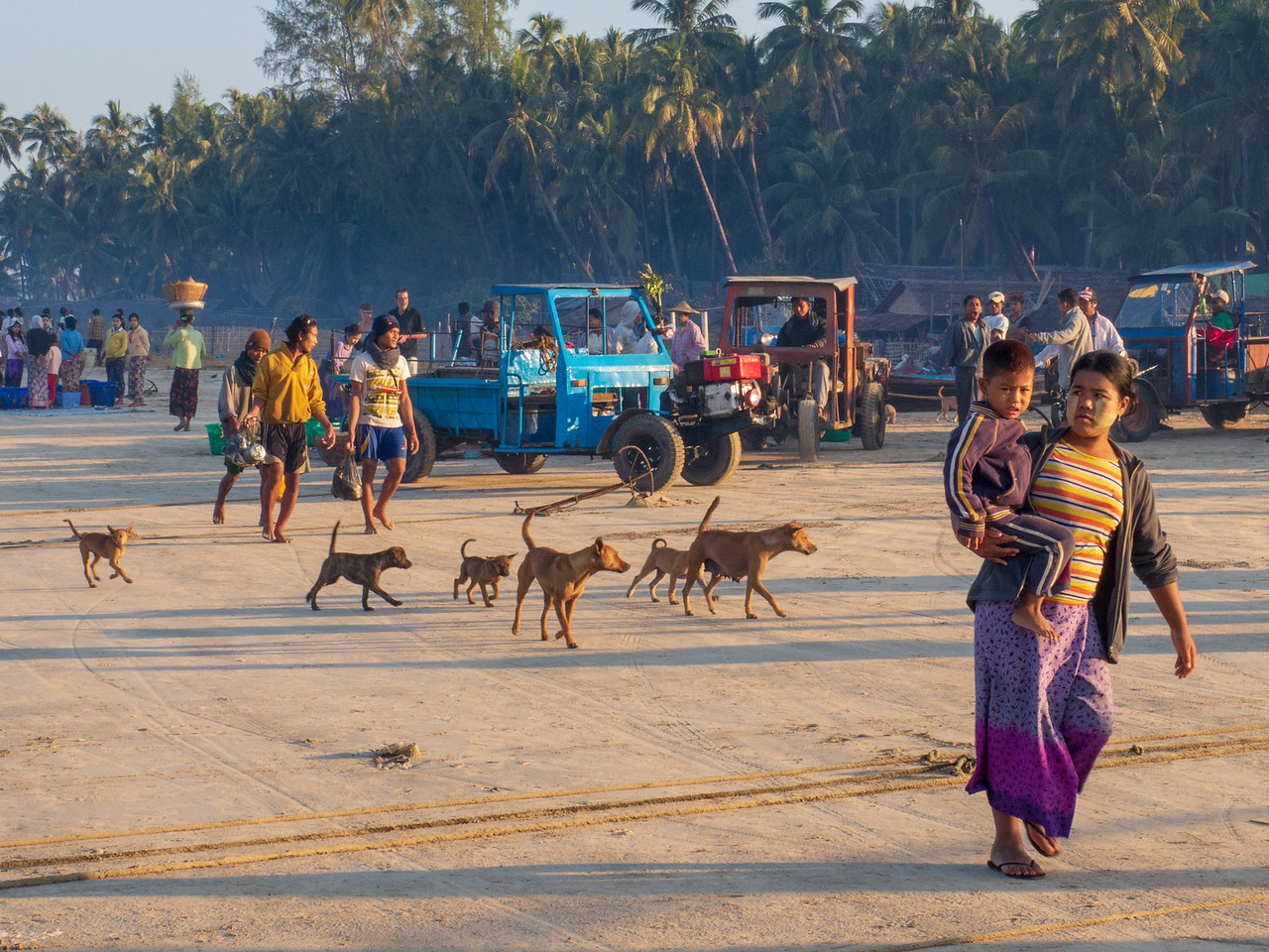 Dogs in the Myanmar FIshing Village Are Skinny, but Optimistic