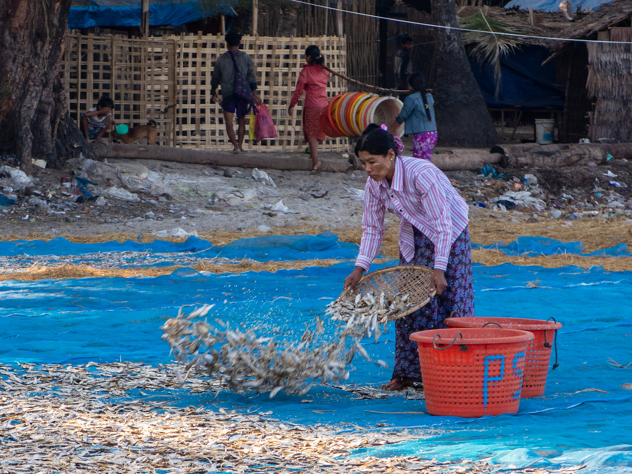 FIsh Being Spread on a TArp for Drying in Myanmar Fishing Village